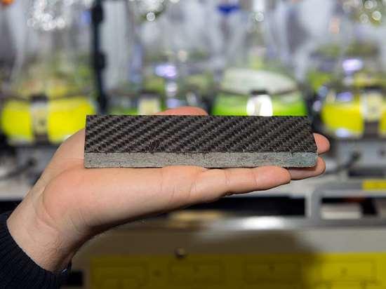 carbono de algas